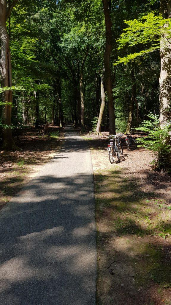 fietsen door het bos van camping De Paalberg naar Garderen