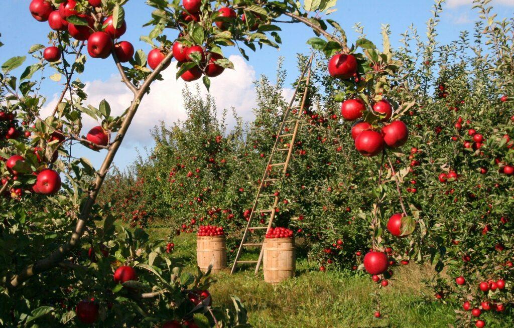 kamperen-op-een-microcamping-bij-een-boomgaard