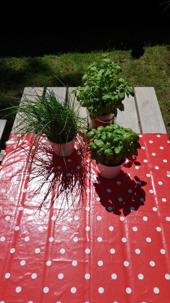kruidenplantjes op de camping